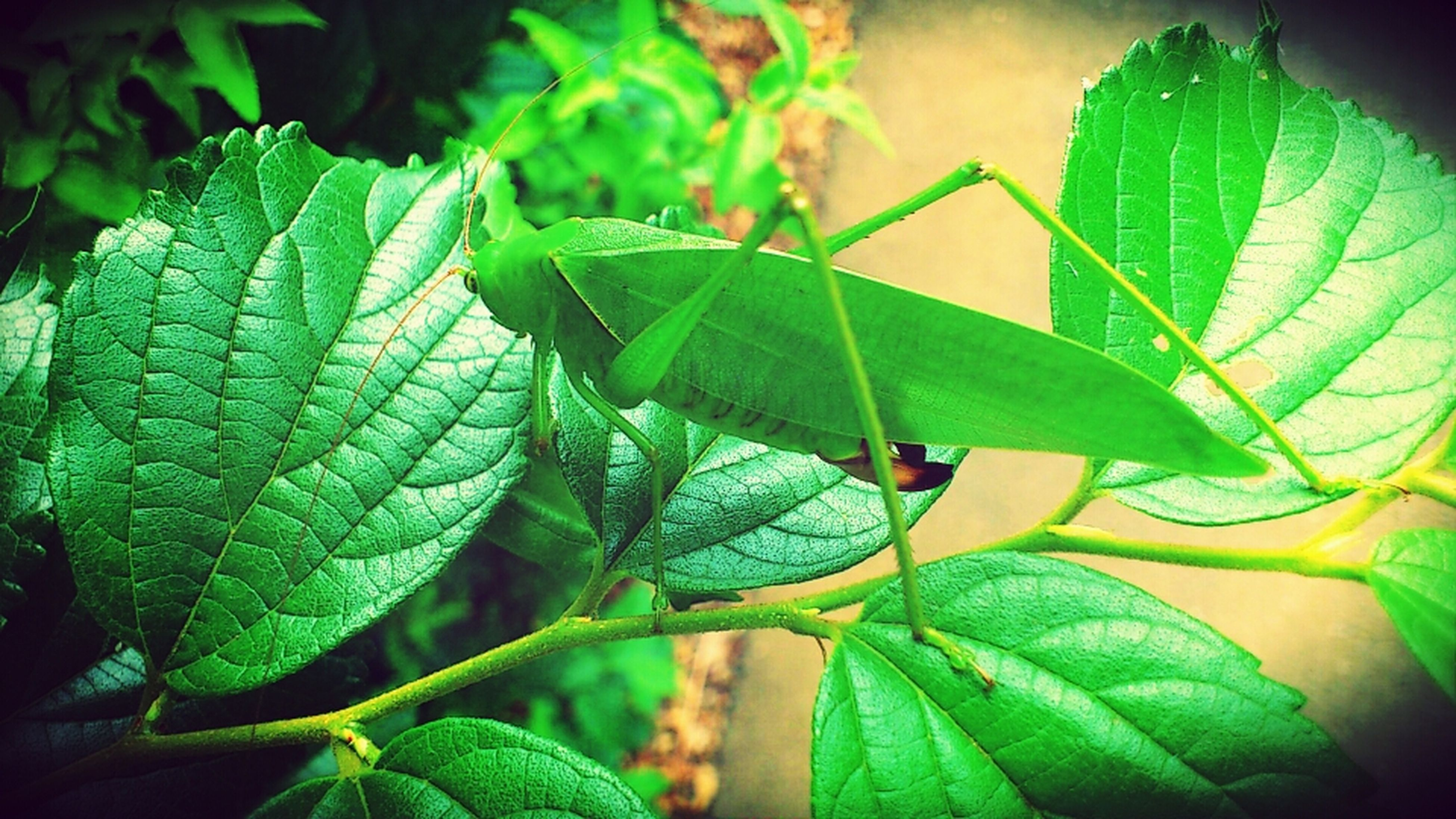 leaf, green color, leaf vein, close-up, plant, one animal, nature, leaves, animal themes, focus on foreground, wildlife, growth, animals in the wild, insect, natural pattern, green, beauty in nature, outdoors, selective focus, no people