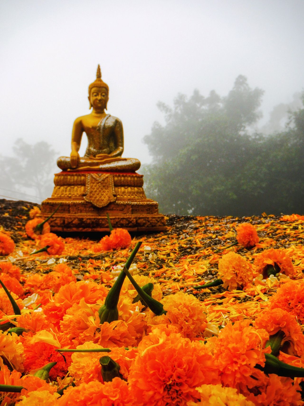 On the way up Khao Khitchakoot, beautiful marigold flower petals covered the ground and Buddhist Statues were everywhere. Thailand EyeEm Thailand Foggy Foggy Morning Remote Place Long Journey Khao Khitchakut Khao Khitcha Koot Khaokitchakoot Buddhist Pilgrimage Marigold Flower Sacred Place Temple In The Mountains Buddhist Tradition Buddha Buddha Statue Buddhastatue Orange Flowers Flower Petals Orange Flower Orange Petals Marigolds Marigoldflower