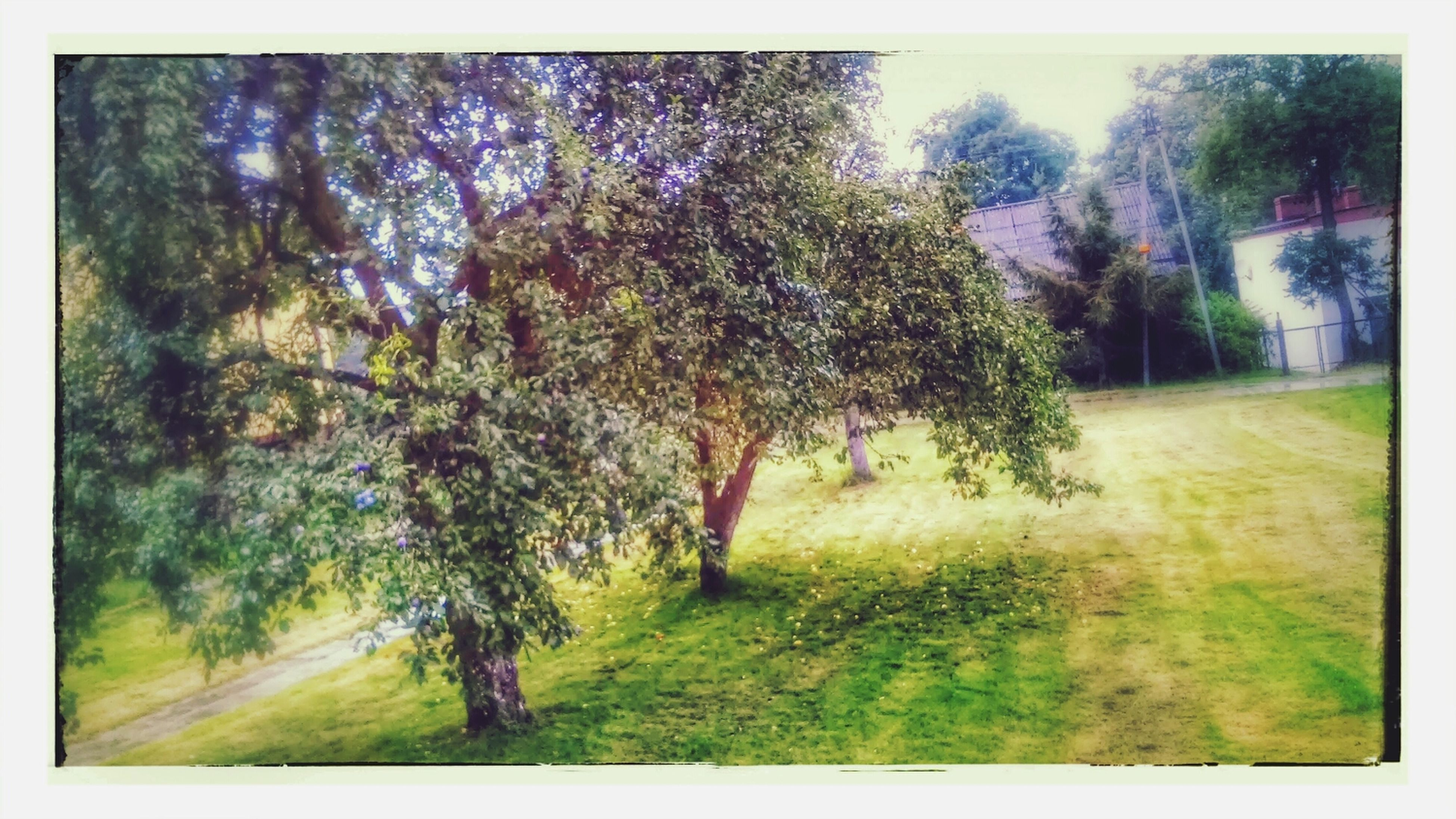 transfer print, tree, auto post production filter, growth, tranquility, green color, grass, tranquil scene, nature, beauty in nature, field, landscape, scenics, forest, day, grassy, sky, outdoors, sunlight, non-urban scene