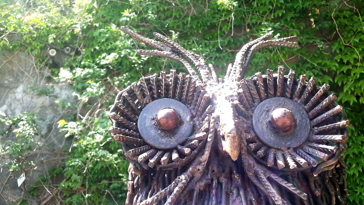 Owl Eyes Cctv Day No People Outdoors Growth Front Or Back Yard Grass Nature Close-up The Street Photographer - 2017 EyeEm Awards