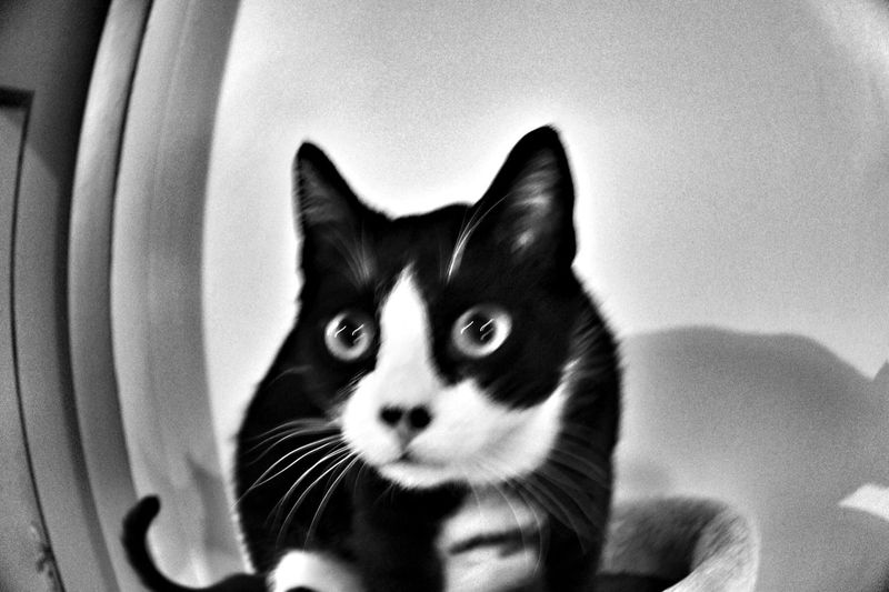 Cat Chat Psychedelic Miaou Blackandwhite Photography Blackandwhite Monochrome Chat Psychocat Animals