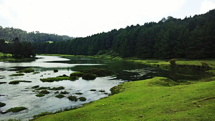 Pykars's scape Been There. Peace Beauty In Nature Clear Sky Day Forest Grass Green Color Growth Lake Lake View Landscape Nature No People Outdoors Pykara Scenics Sky Tranquil Scene Tranquility Tree Water