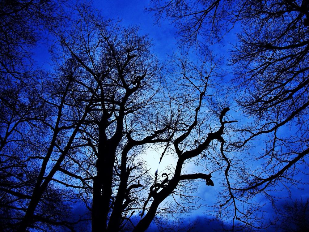 TreePorn Eyeemnaturelover Nature_collection