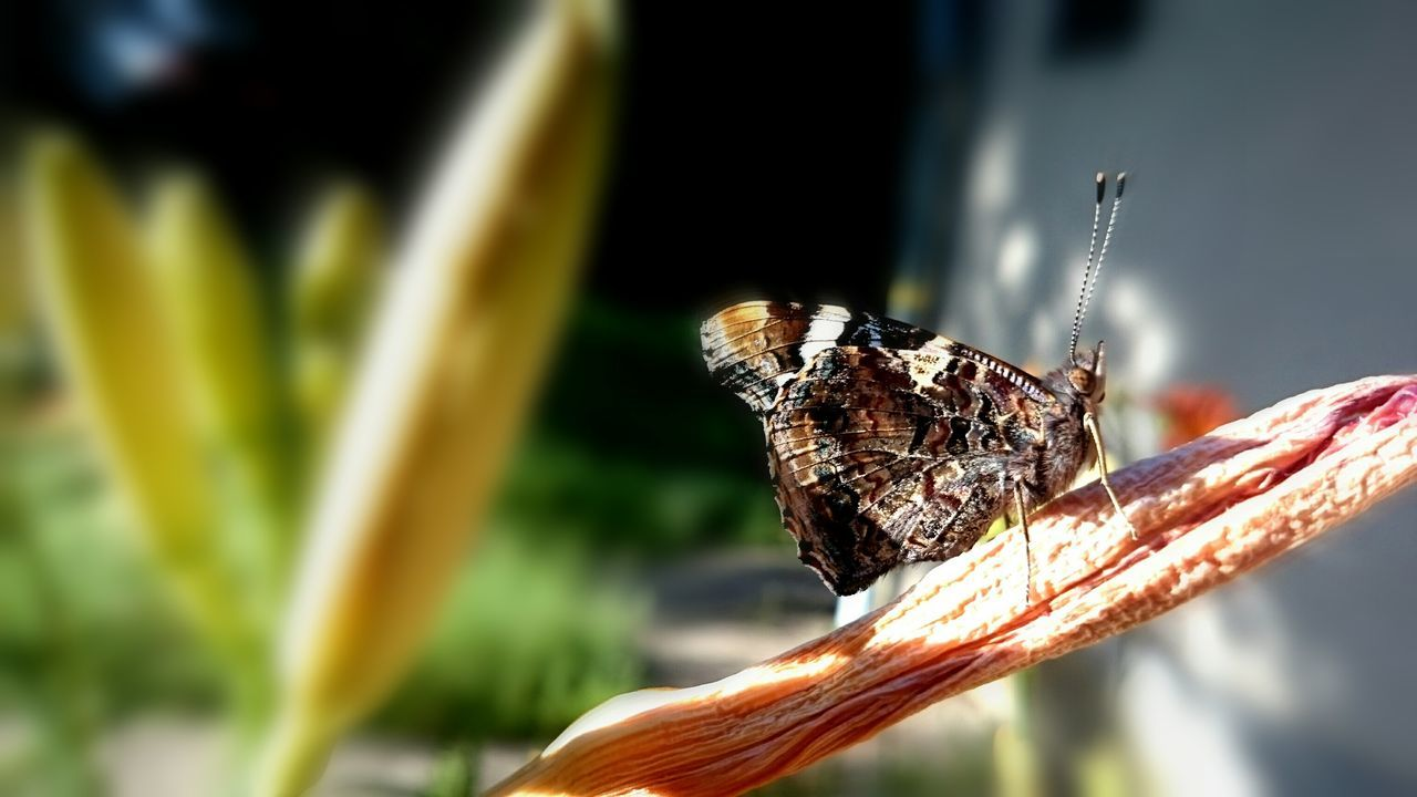 insect, one animal, animal themes, animals in the wild, close-up, focus on foreground, no people, outdoors, nature, day, animal wildlife, butterfly - insect, plant, growth, freshness