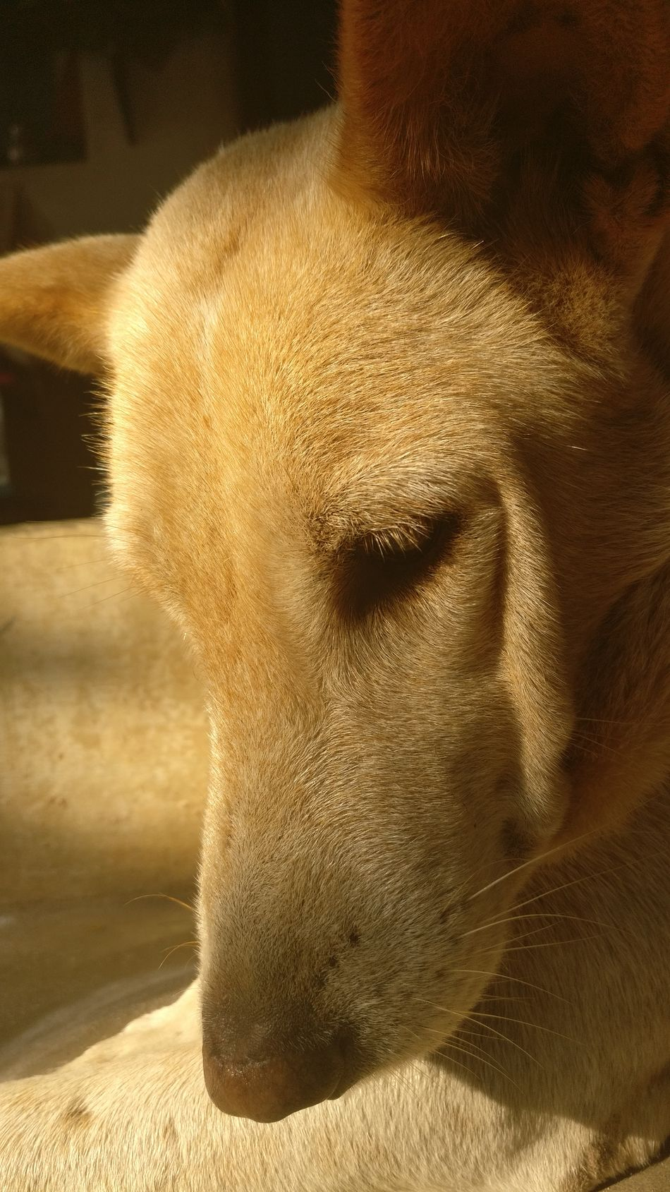 Dog Light And Shadow Detail Portrait Intriguing Personal Perspective Intelligence