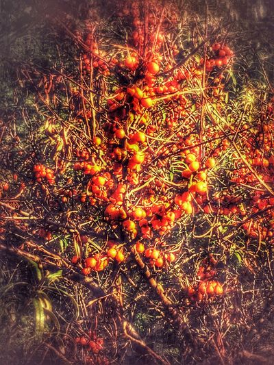 Orange Color Nature Plant Beauty In Nature Day Full Frame Taking Photos BestEyeemShots BestEyeEmedits Eyembestshots EyeEm Best Shots Eyemphoto Besteyemphotos Eye4photography  EyeEmBestPics IPhoneography Selective Focus Outdoors Beauty In Nature Orange