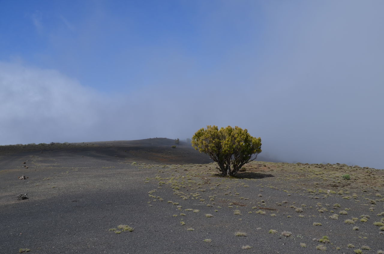 Beauty In Nature El Hierro El Hierro Island El Hierro, Canary Islands, Spain Landscape Nature No People Outdoors Plant Scenics Single Tree Sky Tranquil Scene Tranquility Tree V Volcanic  The Great Outdoors - 2017 EyeEm Awards