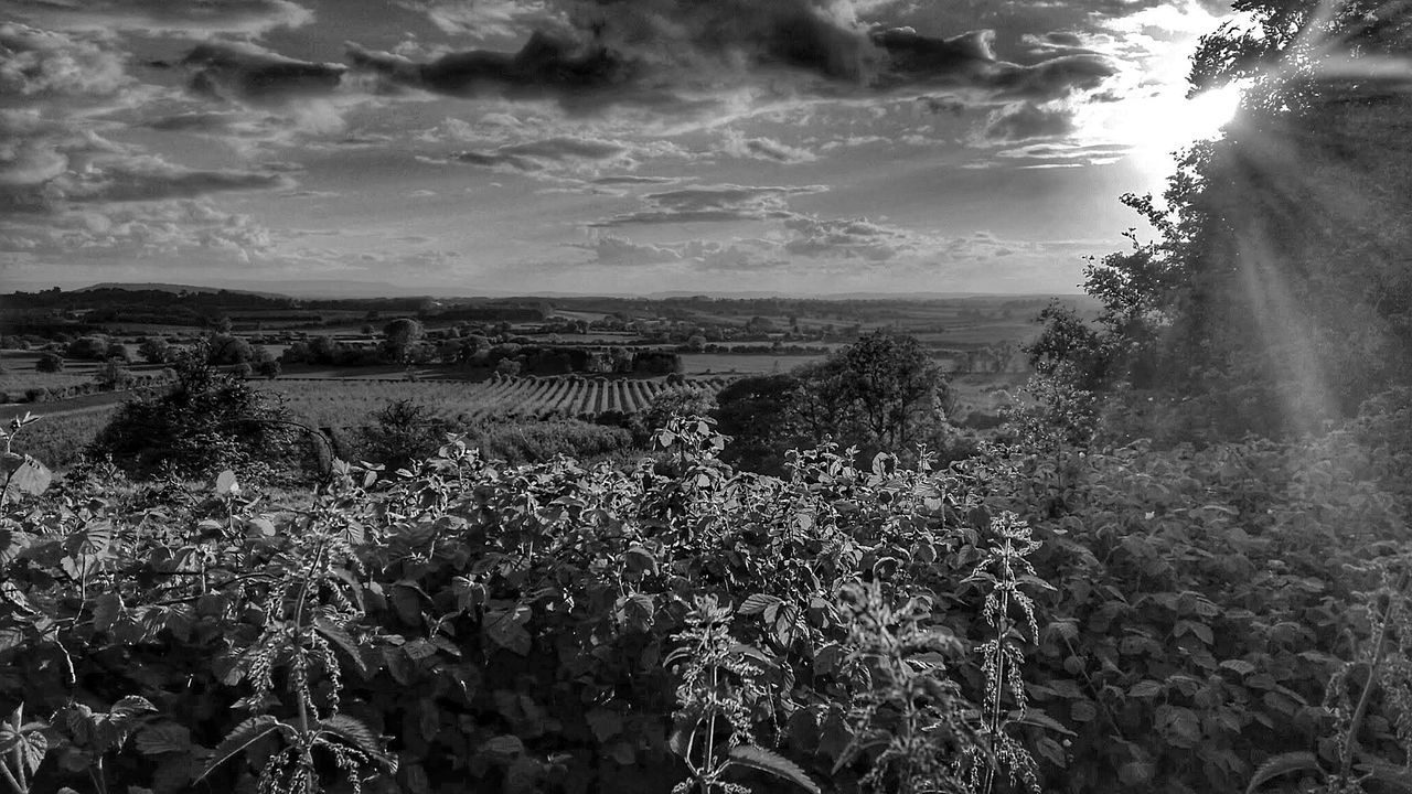 Great Rays (4 of 5) Bnw_friday_eyeemchallenge EyeEm Best Shots EyeEm Nature Lover Sunlight And Shadow Summer Memories 🌄 EyeEm Best Edits Blackandwhite Eye4photography  Black And White Landscape Farm Life Exceptional Photographs Hedgerow Nettles English Countryside Beauty In Nature Blackandwhite Photography Stinging Nettles Monochrome EyeEm Landscape