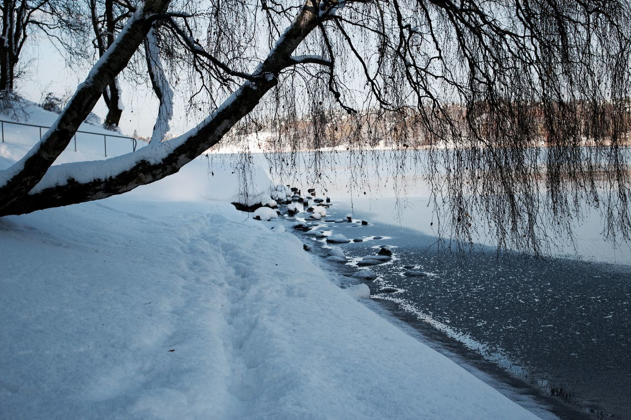 bare tree, nature, tree, beauty in nature, cold temperature, winter, snow, water, no people, scenics, tranquility, tranquil scene, lake, outdoors, branch, day, animal themes, bird, sky