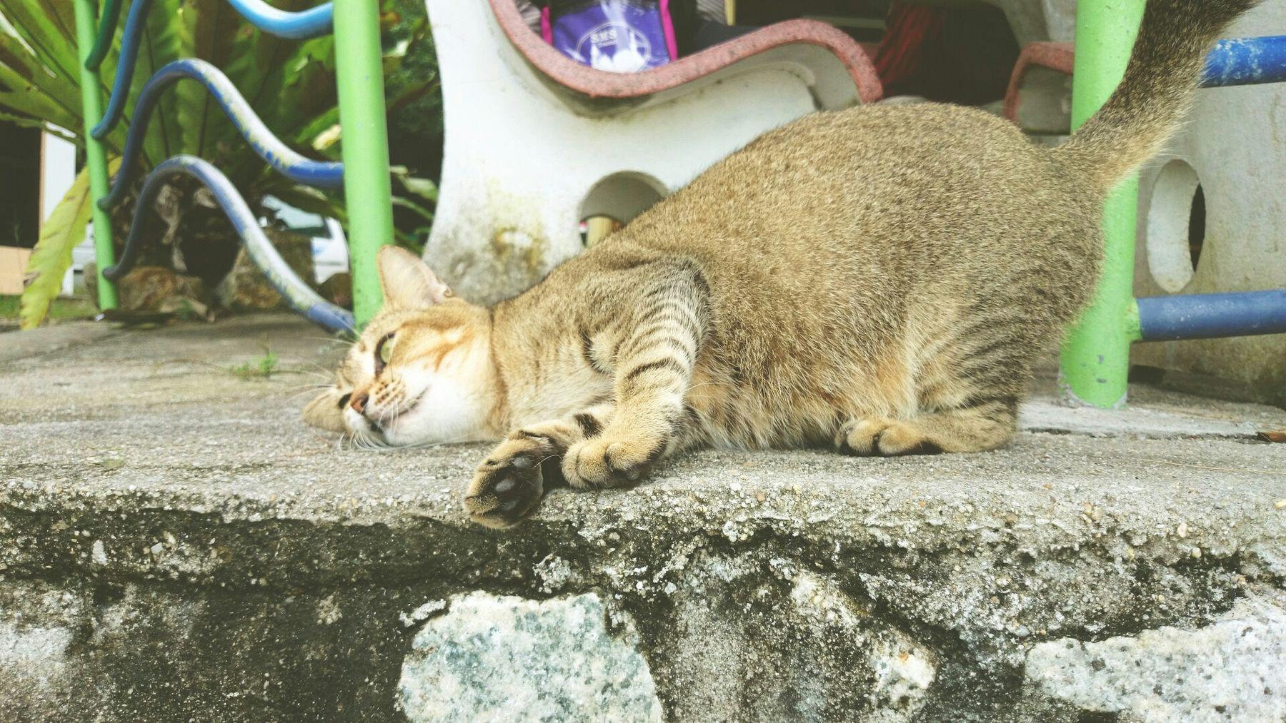 Streetphotography Cat Animal Beach