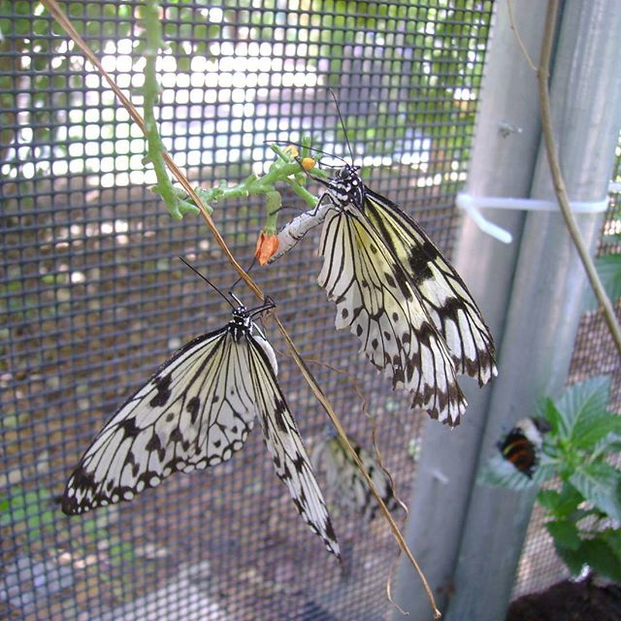 Butterflies Nature Photography Macro Photography San Antonio Zoo Close Up Photography No Edit No Filter Photography