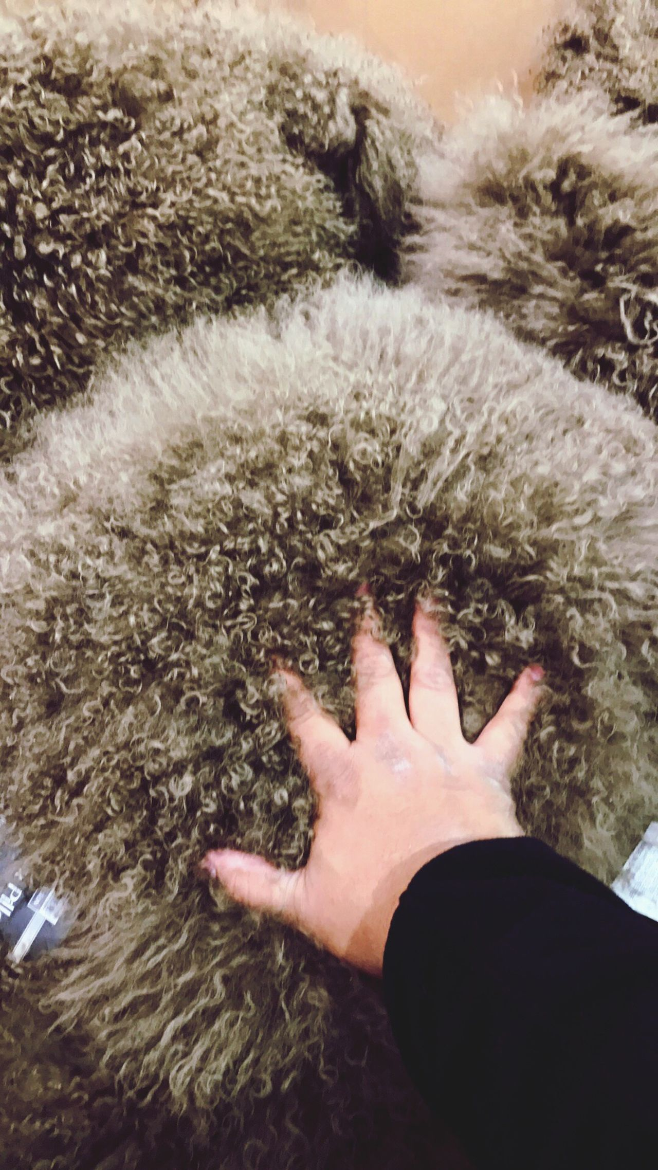 High Angle View Human Hand One Person Real People Lifestyles Human Body Part Leisure Activity Indoors  Nature Close-up Hedgehog Day People Sherpa Costco Throwpillows