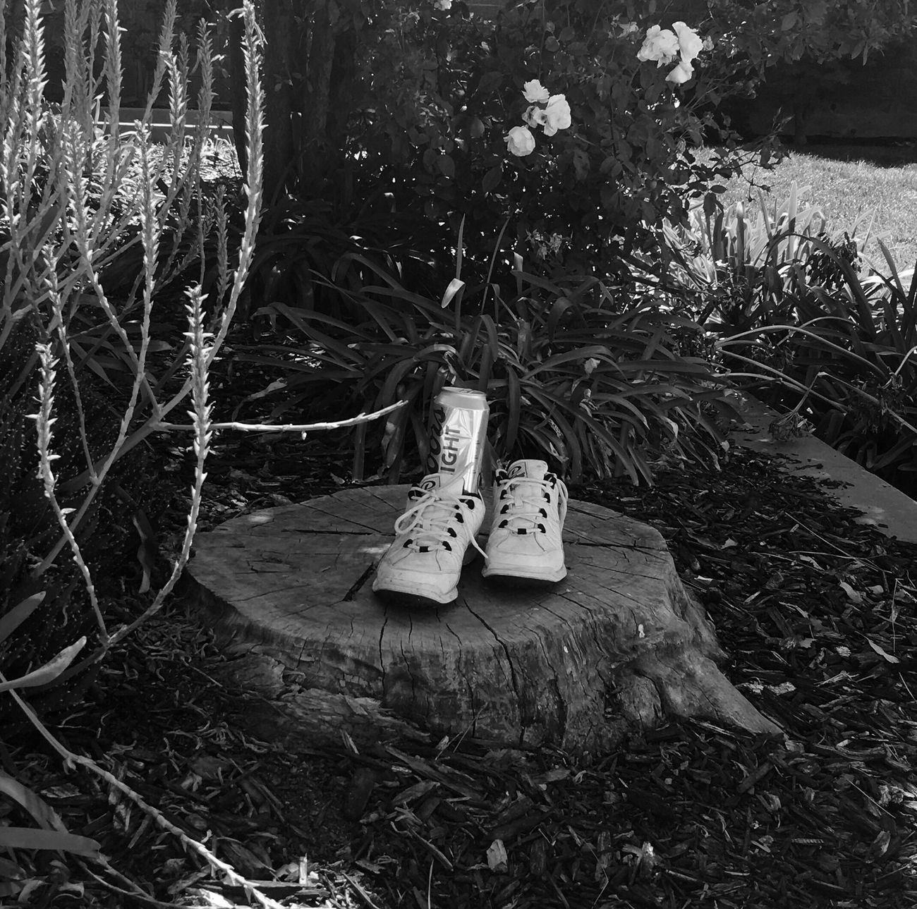 The Missing Shoe Lost Drinks Black And White