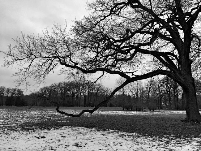 Big Tree   Tree Nature Bare Tree Outdoors Beauty In Nature No People Tranquility Day Landscape Potsdam Park Sanssouci Black And White Nature Winter Cold Temperature Bnw_collection Schwarz & Weiß Winter Trees Bäume Landscape_Collection Natur Schnee Snow Blackandwhite Frost Schwarzweiß