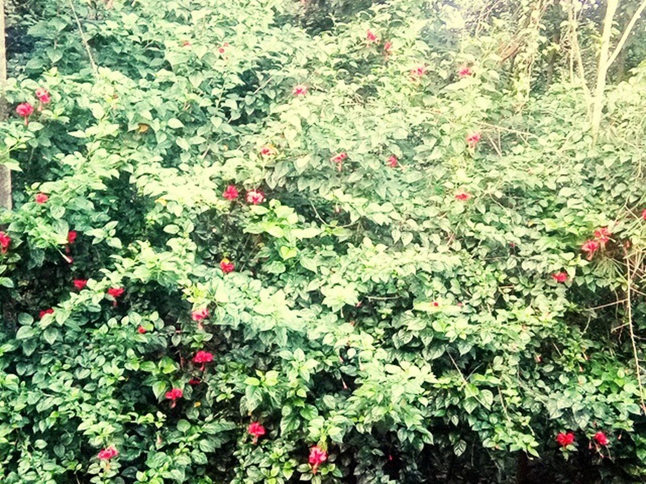 foliage, vegetation, spring, green, botanical, growth, shrub, summer, garden, bush, colorful, flower, blossom, red, botany, nature, no people