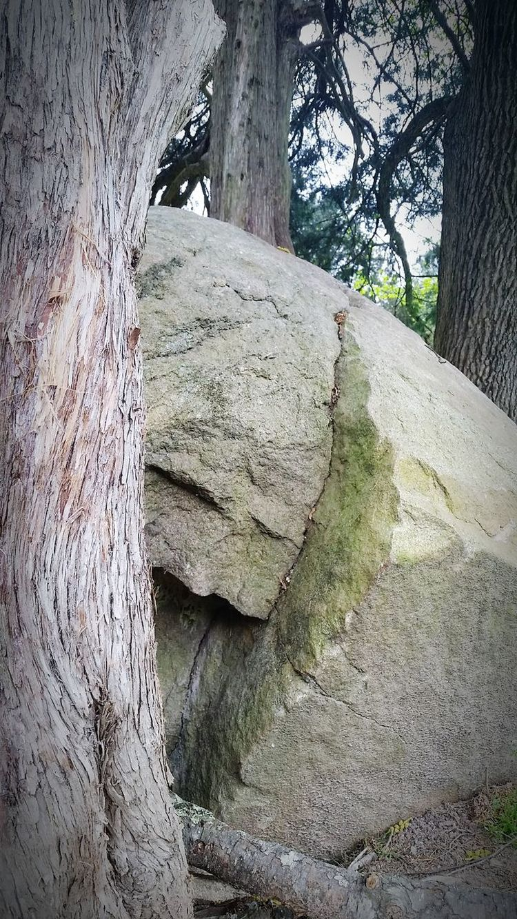 Day Outdoors Nature No People Tree Beauty In Nature Close-up Close Up Serene Rocks Grey Crevices Rock Formation Boulder Trees Grass Nature Textured  Spaces In Between Art Is Everywhere