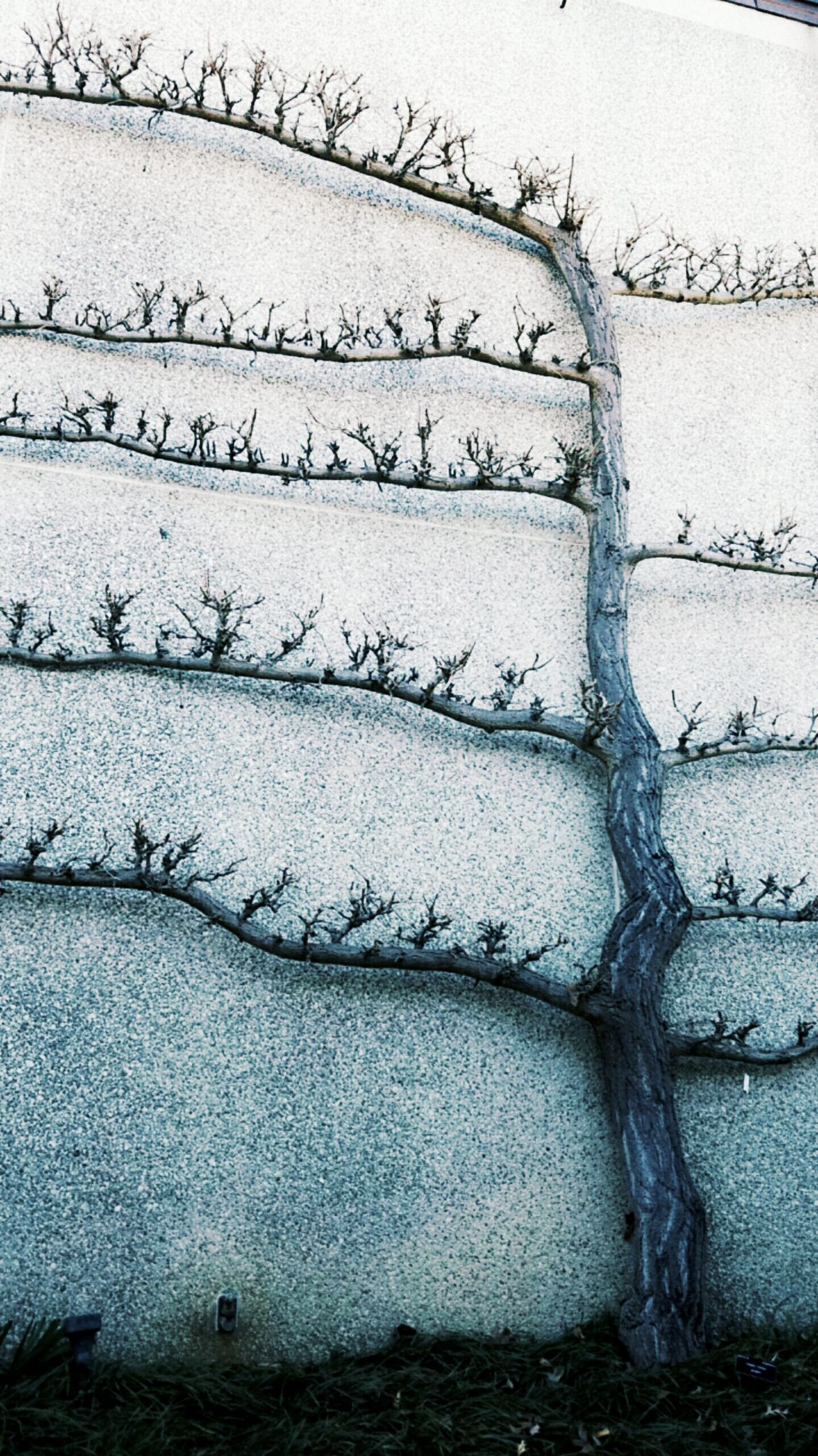 Tree No People Day Nature Garden Branches Beauty In Nature Bare Tree Branch Leaf Twigs Twigs And Branches Wall Close-up Outdoors Barren Landscape
