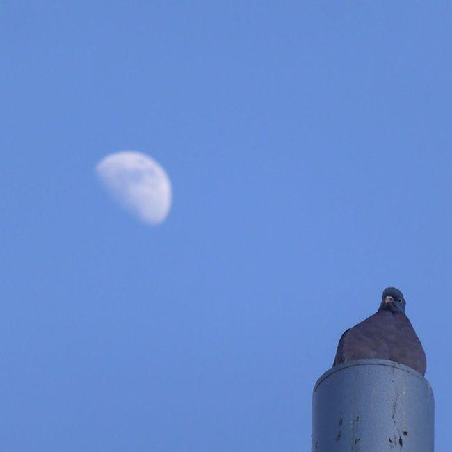 Aquí se está estupendamente. Lunalunera Skylovers Moon Bird sky Zaragoza igerszgz
