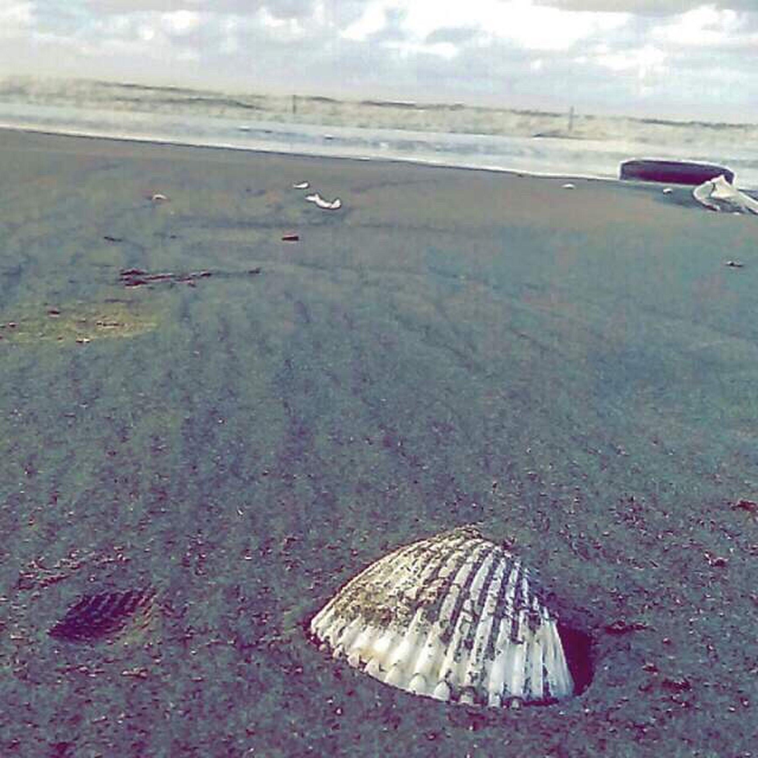 sea, beach, sand, transportation, nature, outdoors, coastline, sea life, water, day, scenics, no people, animal themes, sea turtle