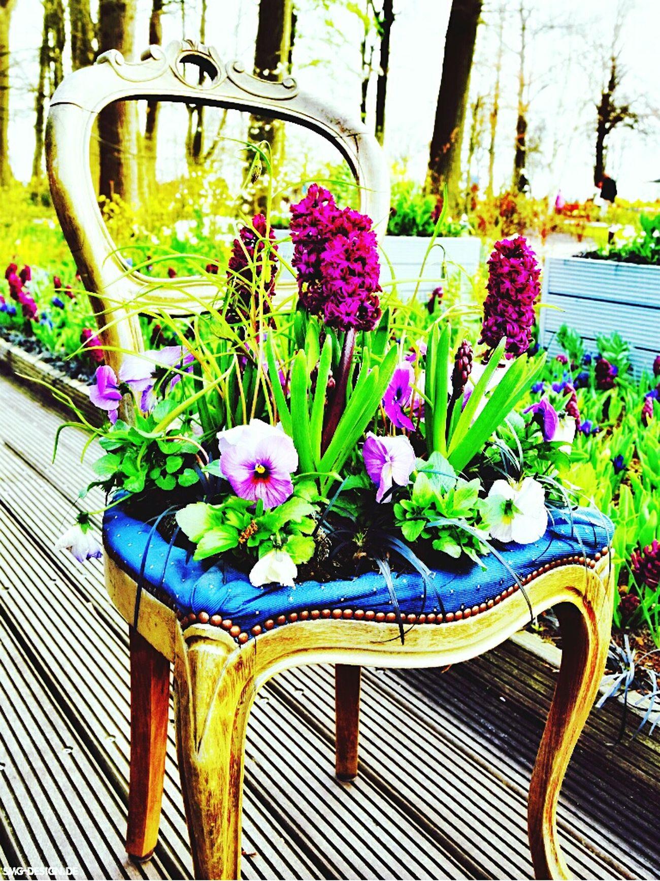Yeah Springtime! Creative Power EyeEm Best Shots Popular Photos Tadaa Community Flowers Flowers,Plants & Garden To Do List SMG DESIGN EyeEm Gallery