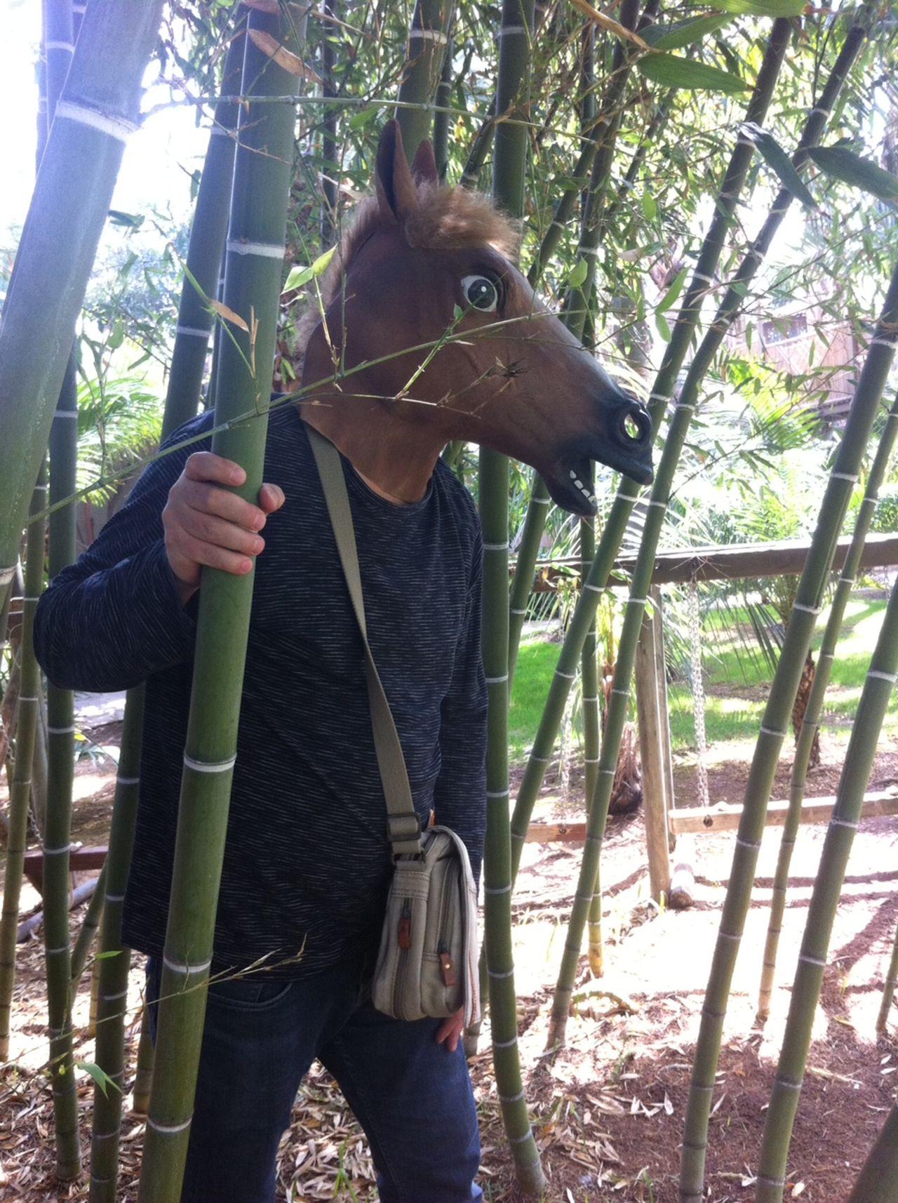 Beautiful stock photos of lustige tiere, Animal Imitation, Animal Representation, Bamboo - Plant, Benicarló