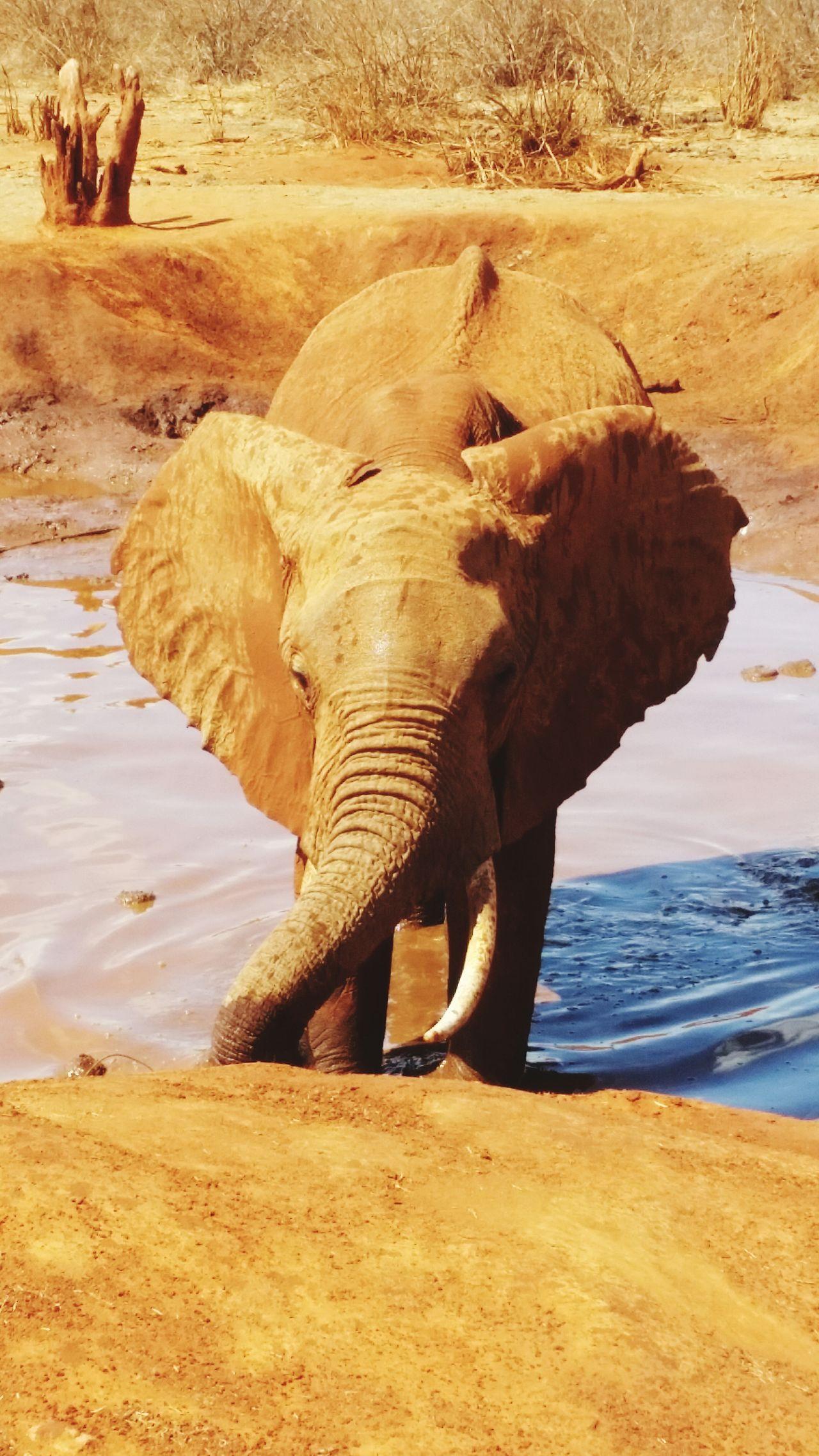 Kenyan wildlife @ Tsavo East First Eyeem Photo Elephant Wildlife Kenya Water Hole Africa Safari Animals National Park Nationalpark Tsavo Tour Adventure