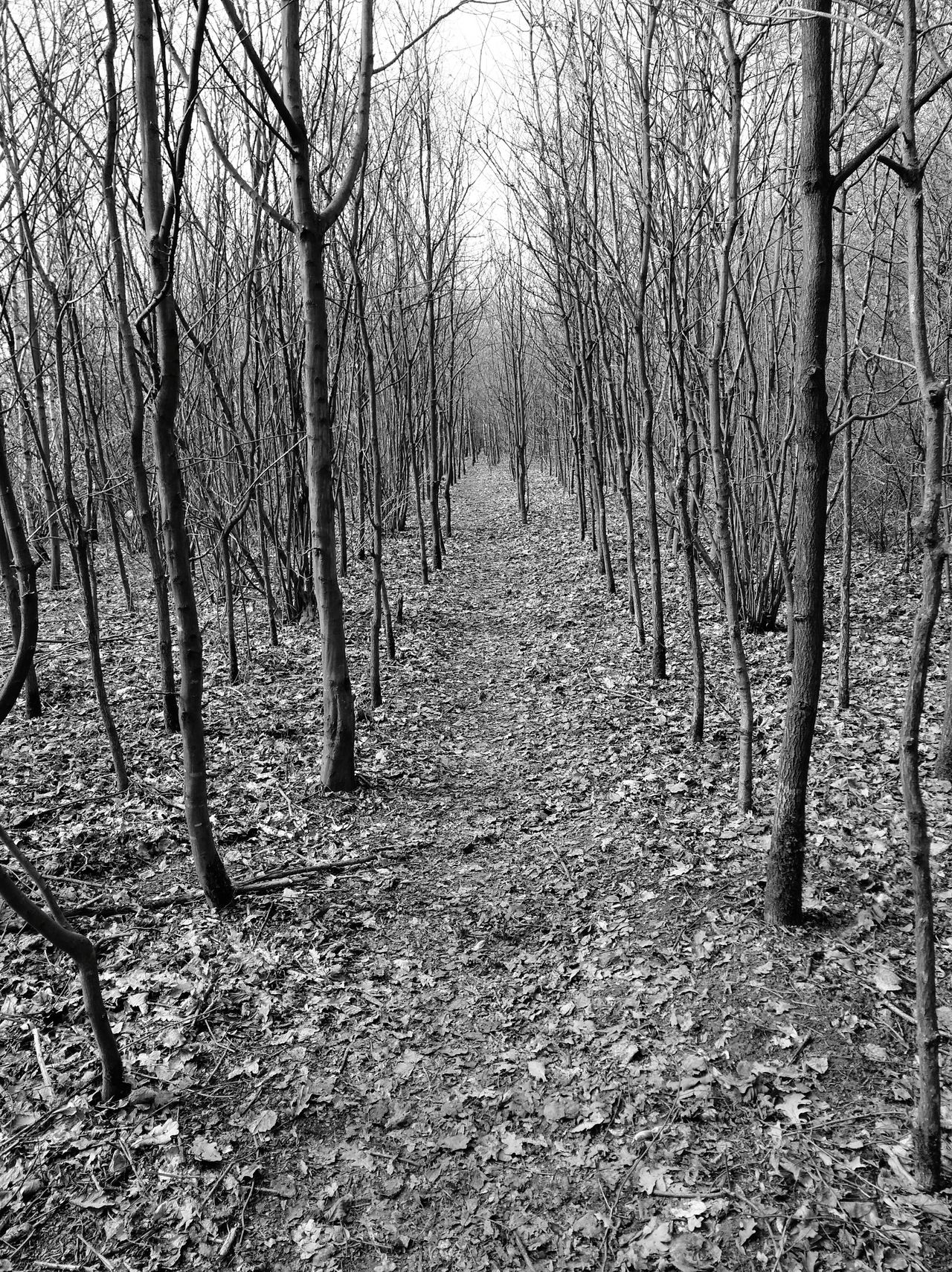 Tree Nature Beauty In Nature On My Walk Today We Are Eyeem, We Are Photography We Are Photography, We Are EyeEm Melancholic Landscapes Landscape Tree Blackandwhitephotography Blackandwhite Bnw Photography Spooky Trees