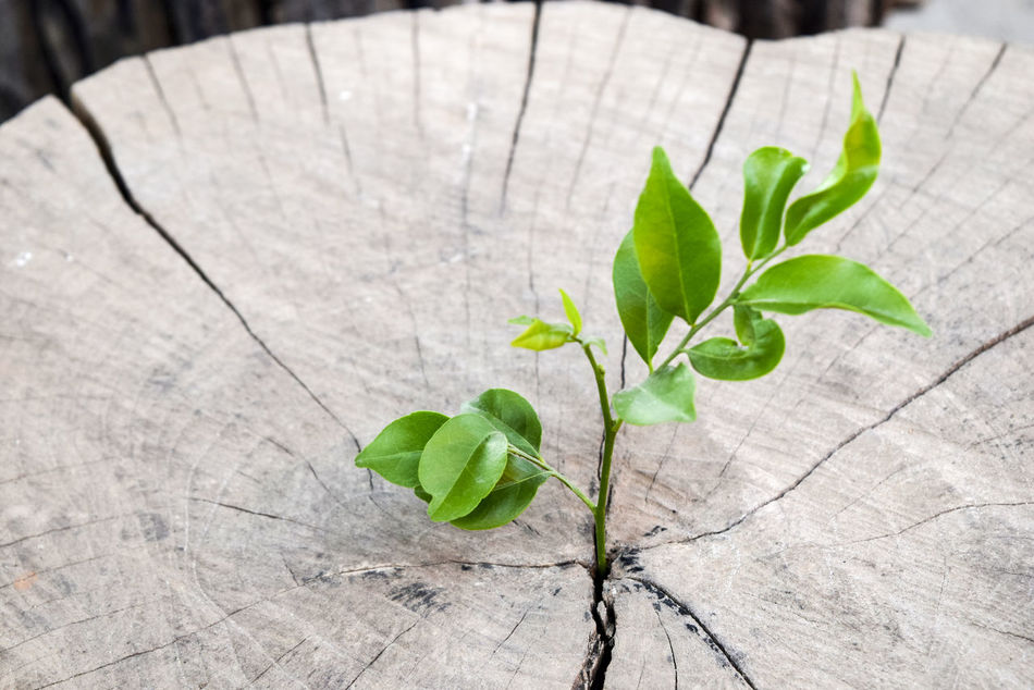Beginnings Close-up Day Fragility Freshness Green Color Growth Leaf Nature New Life No People Outdoors Plant