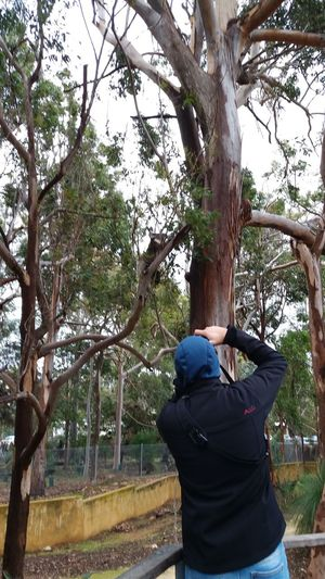 Rear View Tree One Person Adults Only People One Man Only Only Men Adult Men Lifestyles Real People Outdoors Nature Day Sky Nature Koalas Naturepark Nature Photography Travel Destinations Yanchep National Park