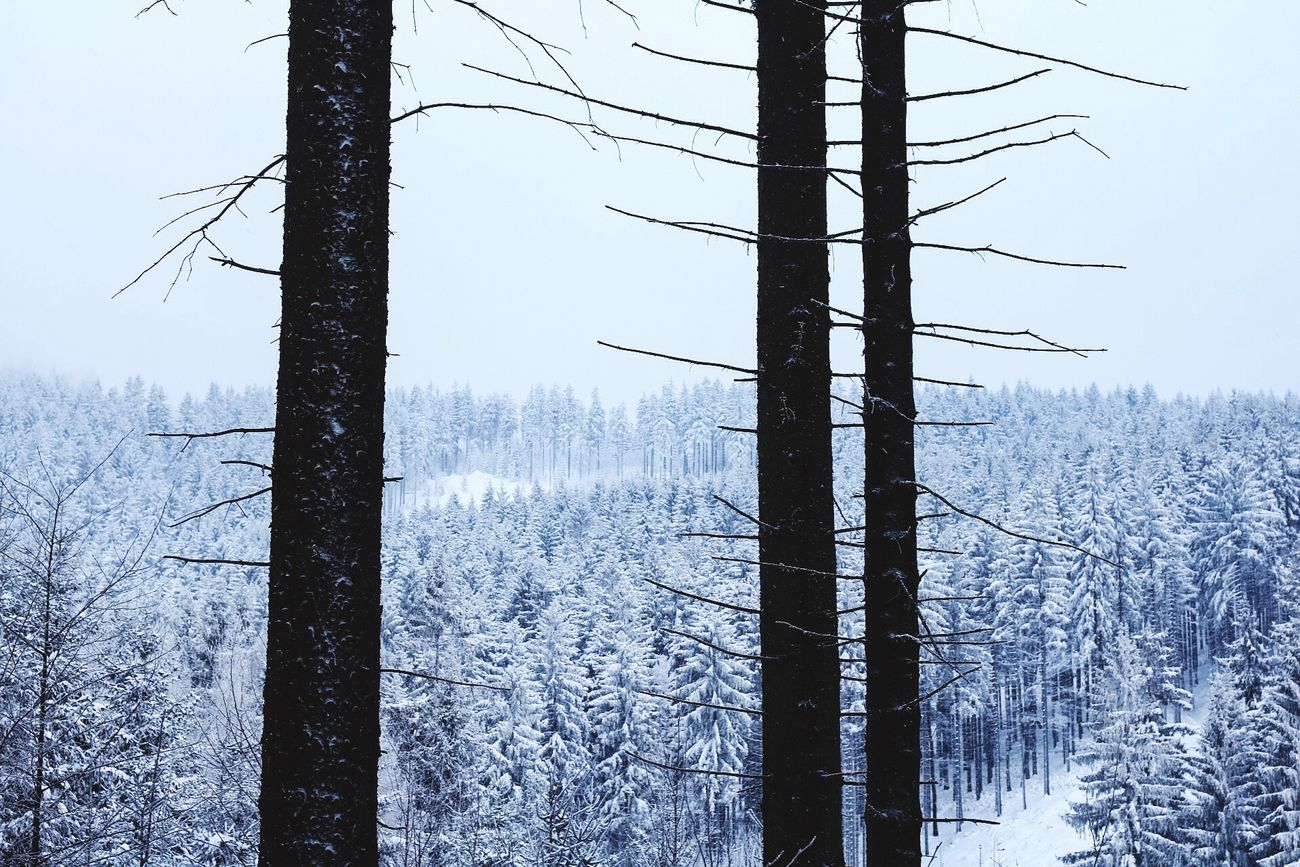 Winter Wonderland Snow Winter Cold Temperature Beauty In Nature Outdoors Sky Clear Sky Scenics Trip ❄ Tree
