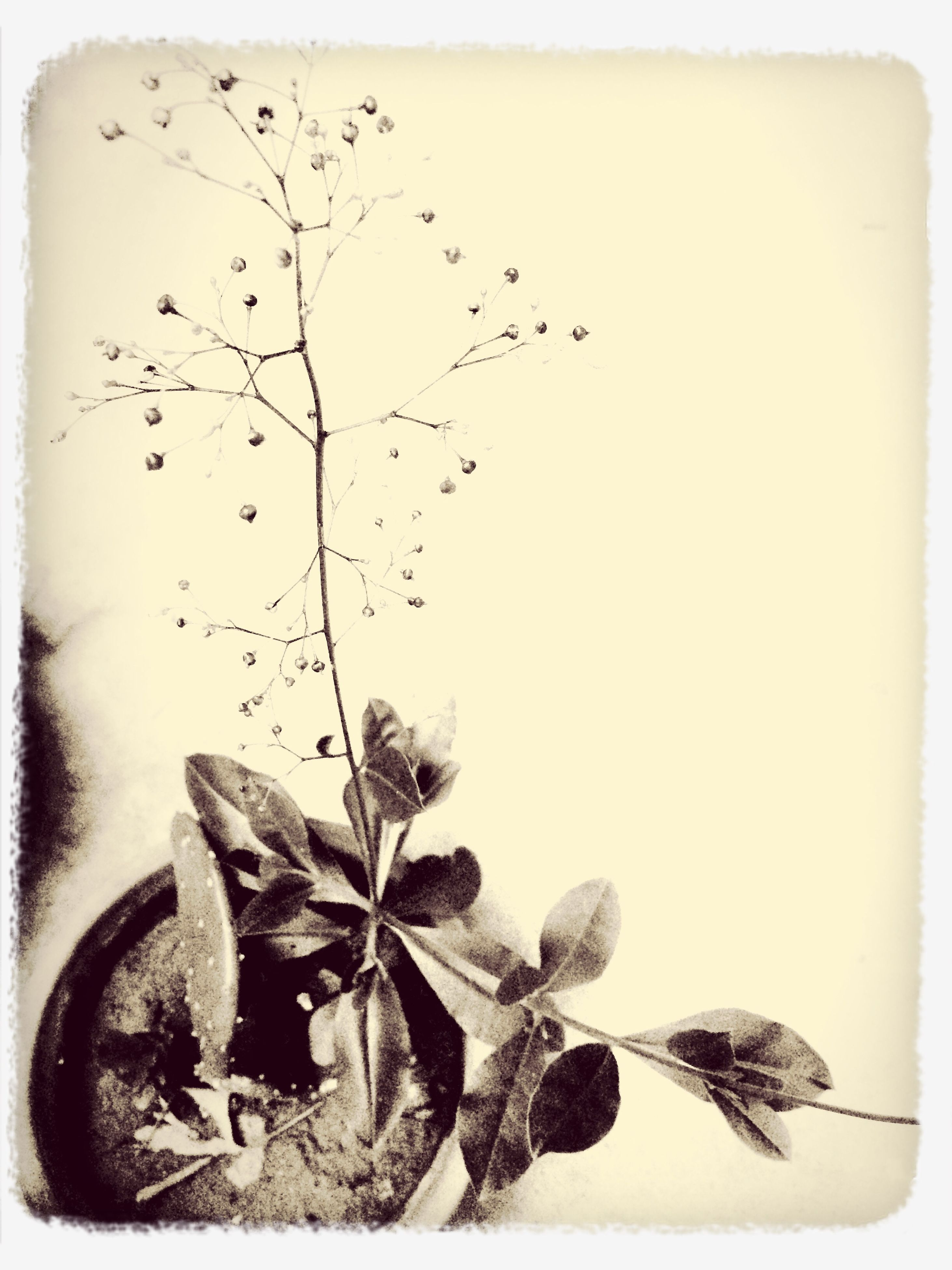 transfer print, leaf, auto post production filter, plant, growth, nature, stem, close-up, branch, beauty in nature, flower, fragility, freshness, no people, dead plant, copy space, twig, tranquility, clear sky, dry