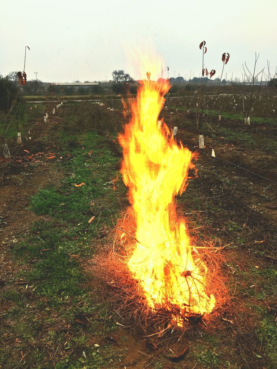 Field Flame Grass Burning Heat - Temperature Outdoors Sunset Landscape No People Sky Nature Day Rural