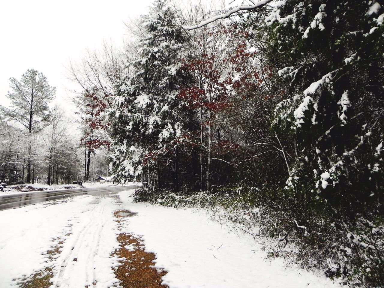 Noxapater Tree Winter Cold Temperature Snow Road Transportation Weather Season  White Color The Way Forward Tranquil Scene Nature Scenics Diminishing Perspective Branch Day Tranquility Snow Covered Non-urban Scene Outdoors