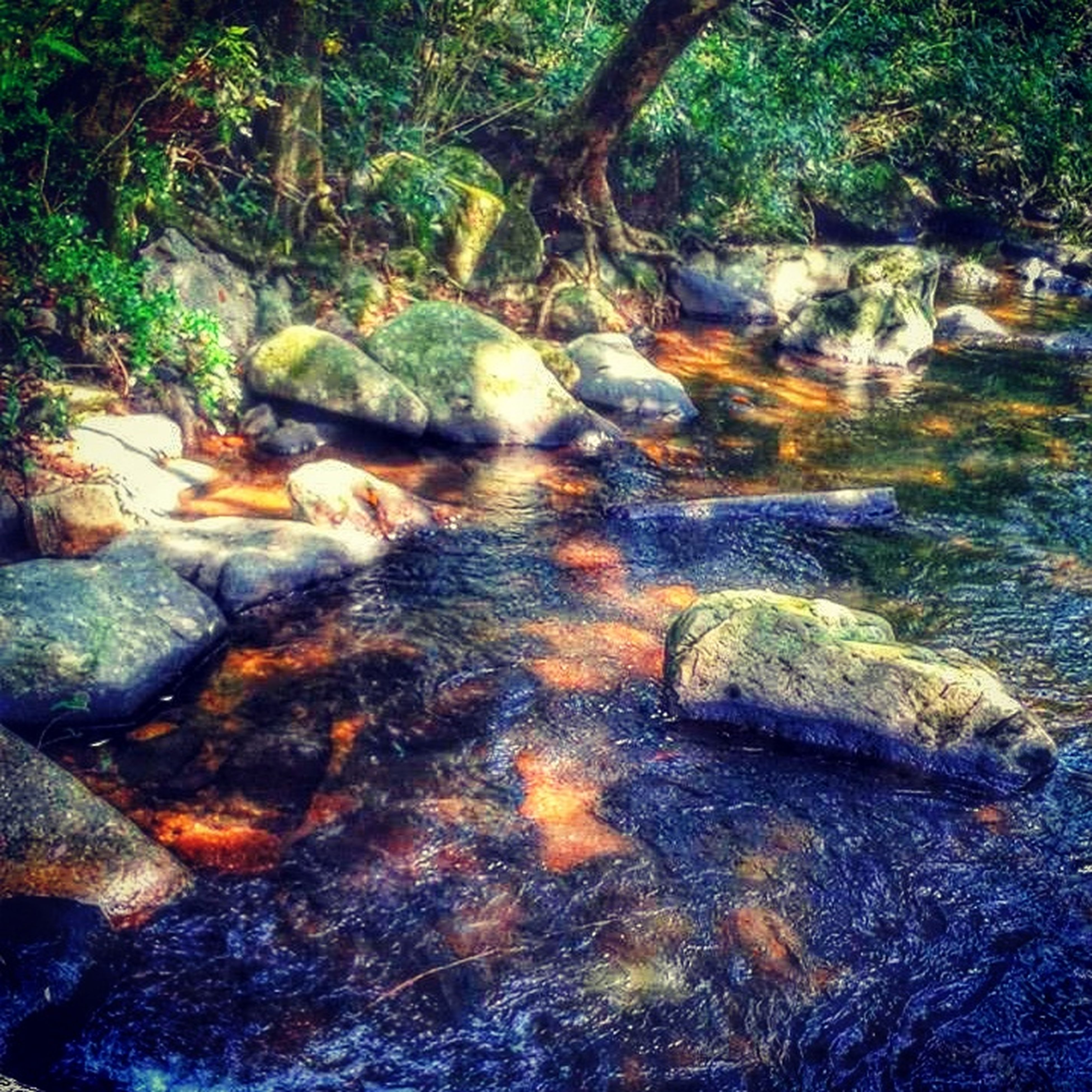 water, rock - object, nature, beauty in nature, tranquility, stream, high angle view, forest, rock, tranquil scene, tree, scenics, rock formation, river, day, outdoors, moss, no people, reflection, flowing water