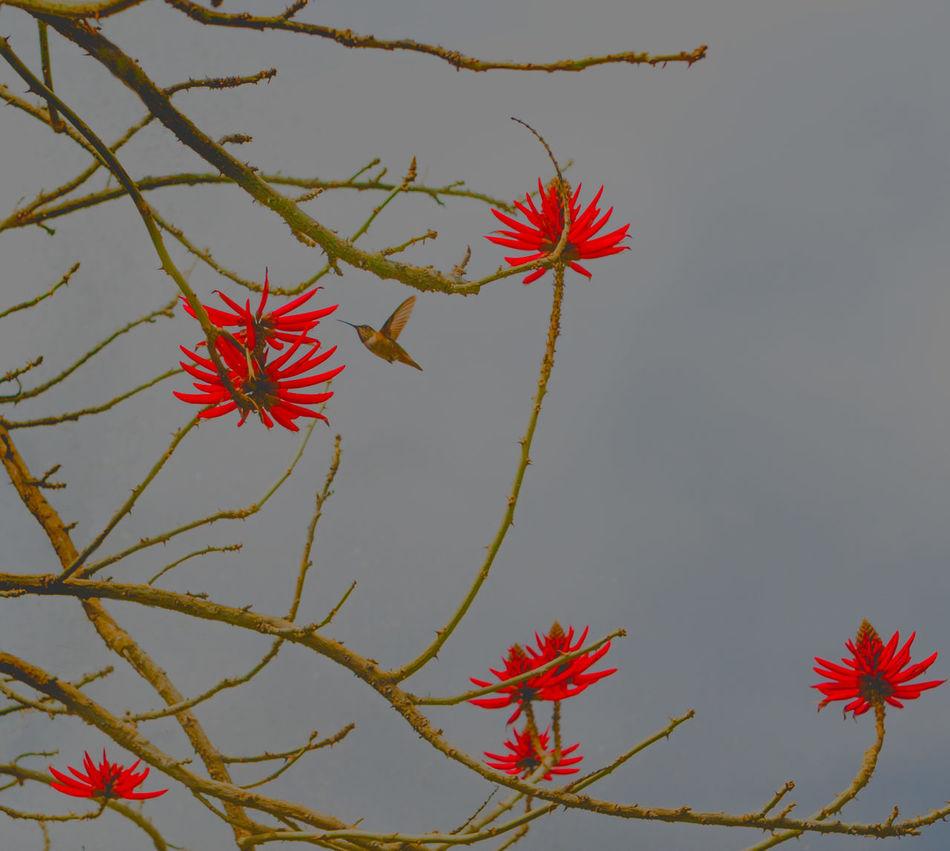 Beautiful stock photos of hummingbird, Animal Themes, Animals In The Wild, Bird, Blossom