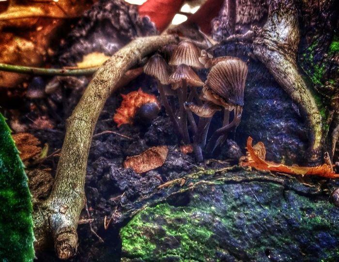 Shroomery Home Sweet Home Harbingers Of The Tragic Fall Mushrooms