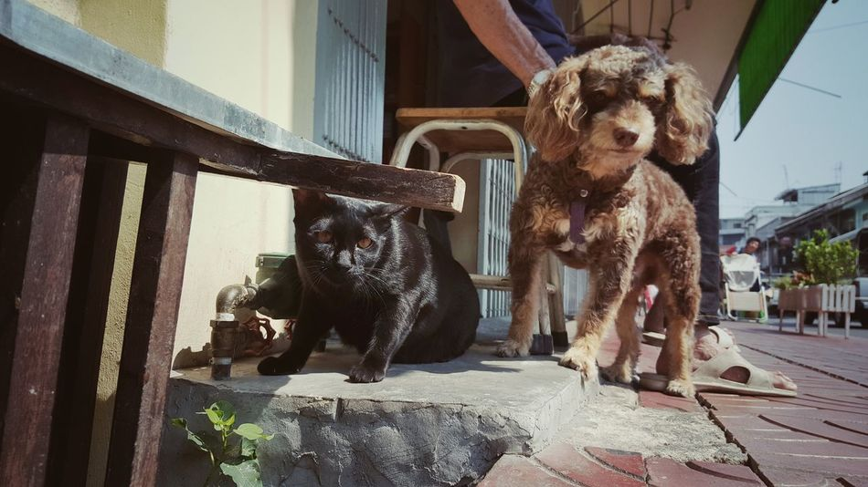 Animal Representation Cat Dog Cat Dog Fr Capture The Moment Cats Of EyeEm Catoftheday Cat Lovers Domestic Cat Dogs Of EyeEm Dogoftheday Dog Life Dog Cat Love Dog Cat Friendship Friendsforlife Couple - Relationship Couples Shoot Pets Brother & Sister Siblings Black Cat Puddle Puddle Dog