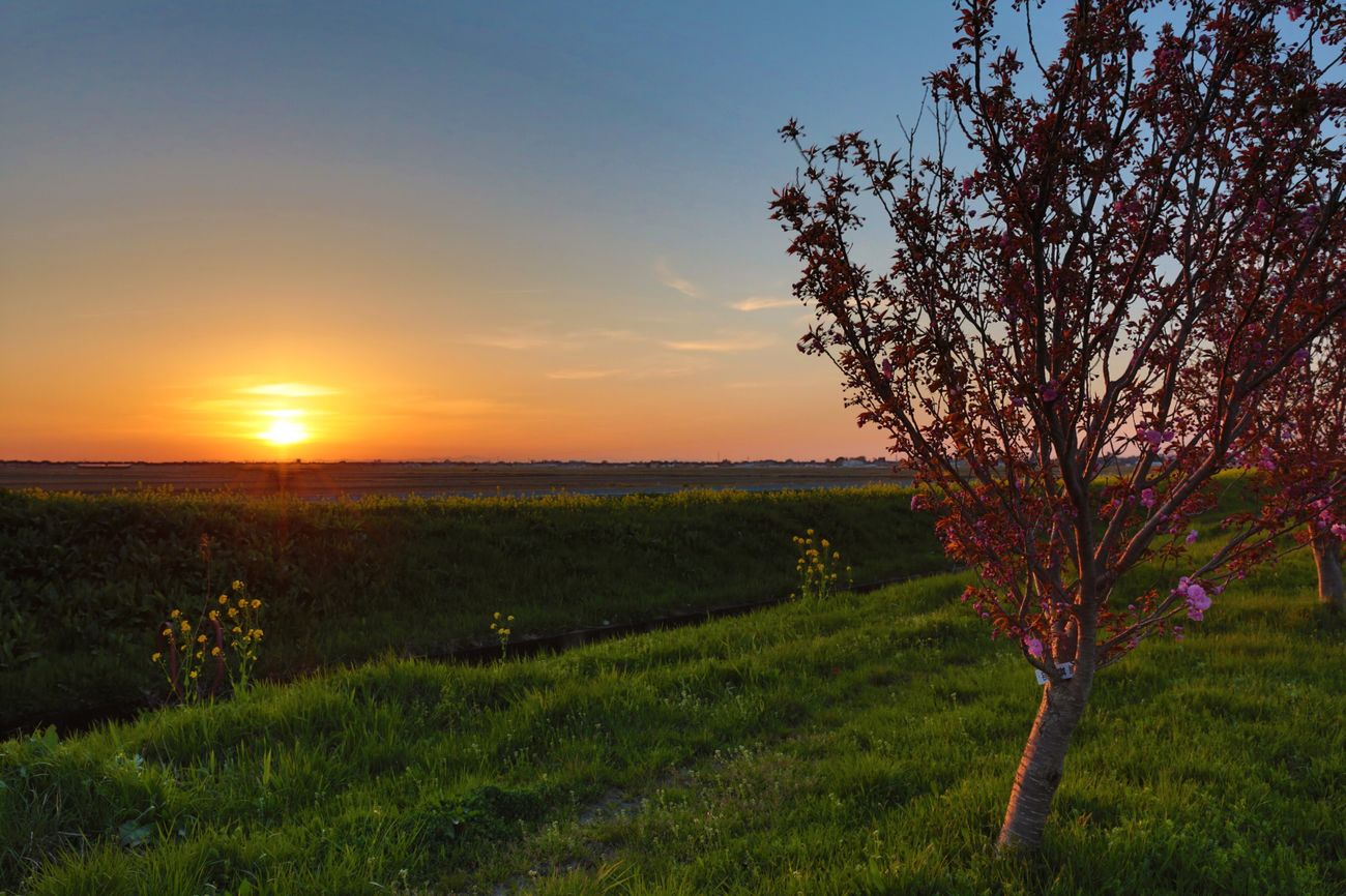 Time at sunset Nature Beauty In Nature Landscape Sky Outdoors Tranquil Scene Tree Field Sun In The Twilight Taking Photos Photo Nature The Sky At Sunset