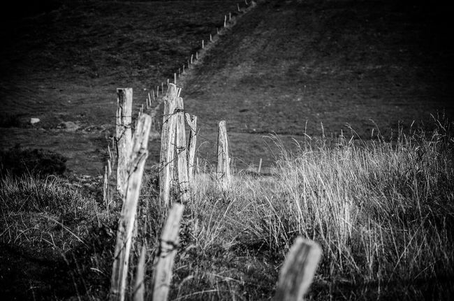 Field Outdoors Nature Eyemcollections France 🇫🇷 NikonLife Nikon D7000 Photographyeveryday Alsace Blackandwhite Black And White Monochrome Nikonphotography Bnwchallenge Nopeople Enjoying Life The EyeEm Collection Beauty In Nature EyeEmBestPics Eyemphotography EyeEm Best Shots
