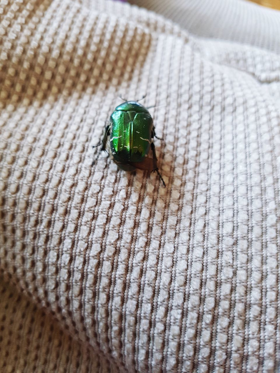 indoors, no people, high angle view, insect, green color, animal themes, animals in the wild, one animal, close-up, day