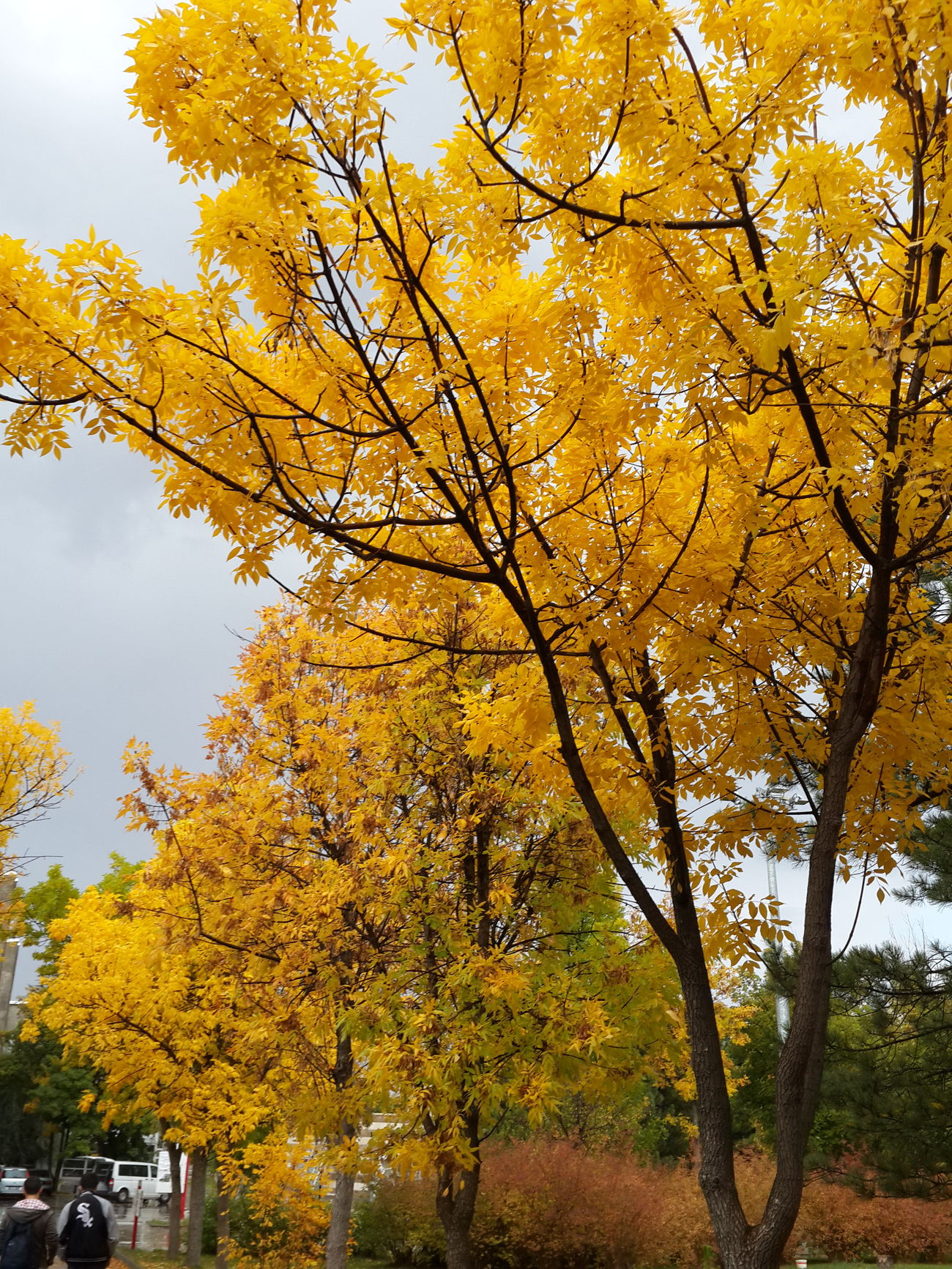 Autumn Colors Bestplace Yellow Photography