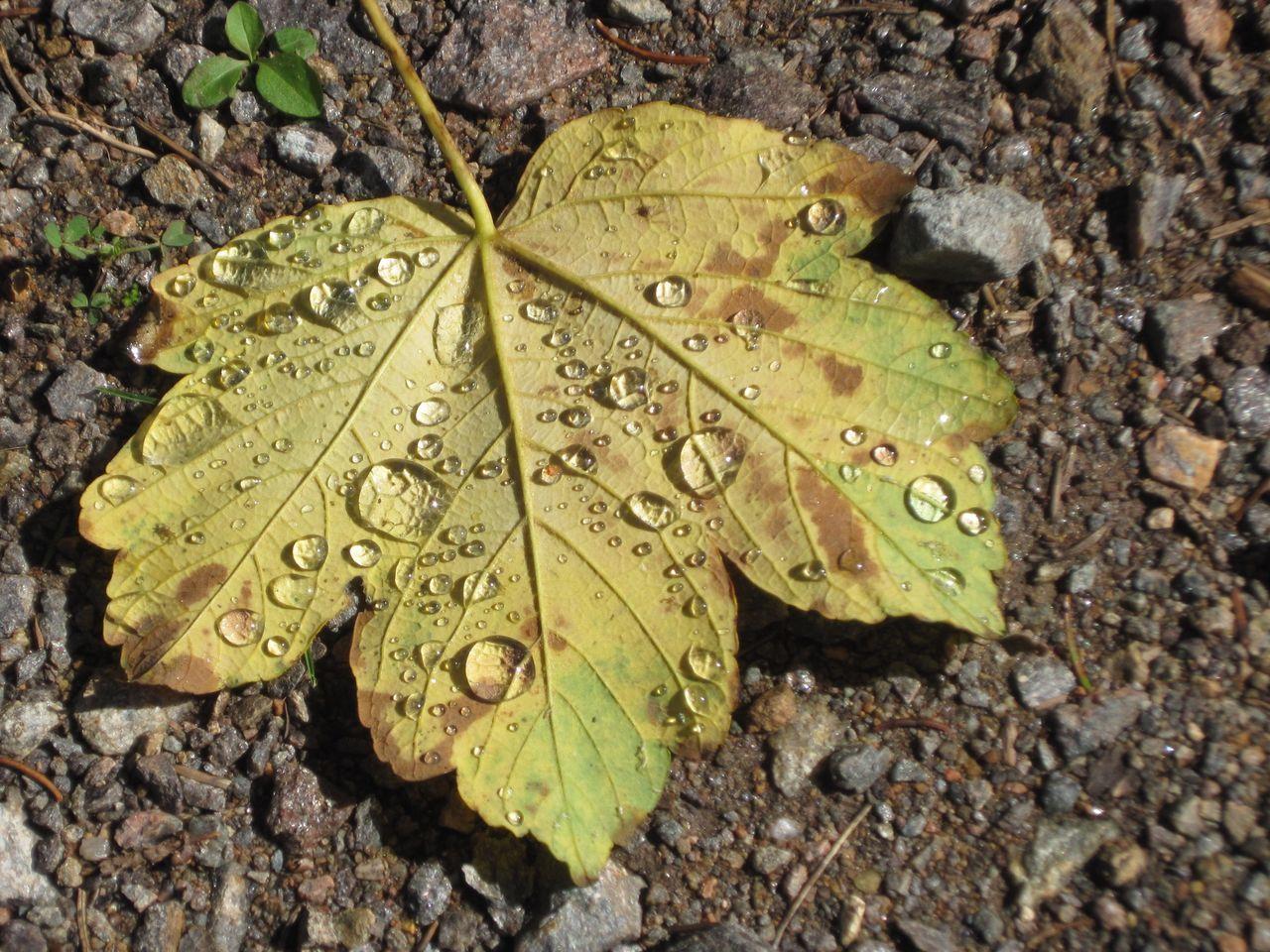 Leaf Dew Dewdrops No Edit/no Filter Blatt Tau Tautropfen Dew #morning #drops #plant #nature