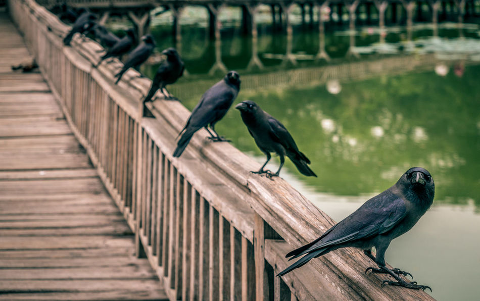 Animal Themes Animal Wildlife Animals In The Wild Beauty In Nature Bird Close-up Day Focus On Foreground Nature No People Outdoors Perching Railing Togetherness Wood - Material