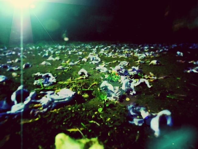 A fieldful of petals Lawn Grass With Flower Garden At Night Flowers Night Photography Bokeh Bokeh Lights Eyeem Photography Home Is Where The Art Is Artistic Edit Nightlight Halo Eyeem Photo EyeEm Masterclass