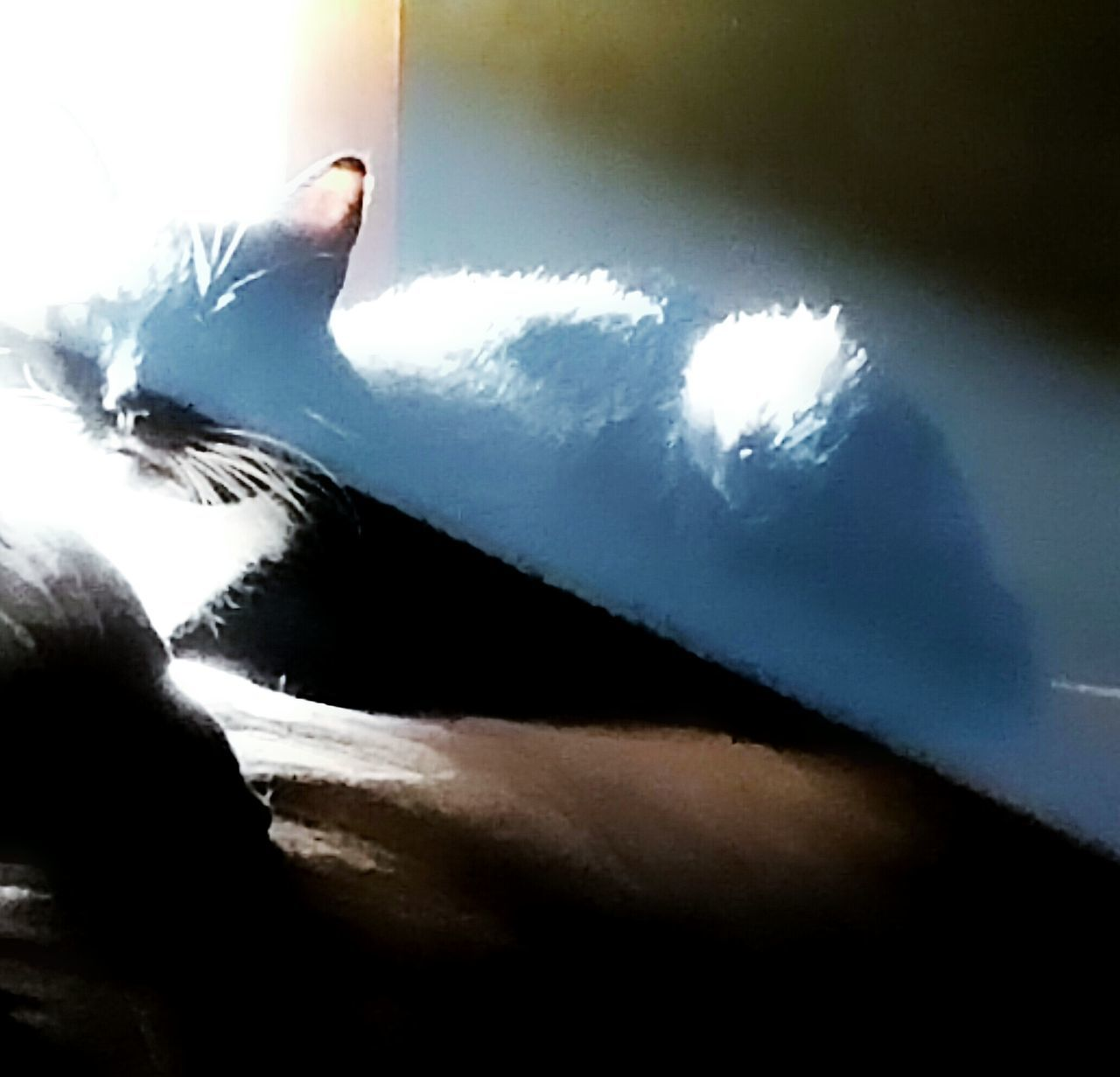 Light And Shadow Tones And Contrast Cat Sunning Sunbathing Cat Sitting In Window Sun Rays Beam Of Light Cat Photography Animal Photography Cat Lovers Animal Lovers Natural Light Photo Natural Light Portrait