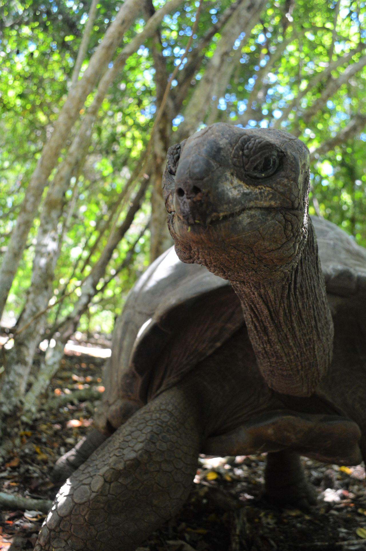 Animal Themes Animal Wildlife Animals In The Wild Close-up Day Forest Nature No People Old Age One Animal Outdoors Prision Island Reptile Tortoise Turtle Zanzibar