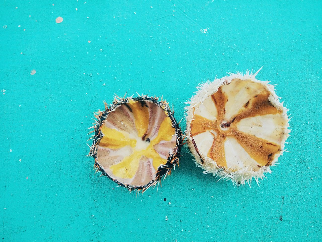 Salawaki (Sea Urchin), when your boat docks at the sandbar, you will be approached by locals selling fresh seafoods such as sea urchin, scallops & oyster. Finding New Frontiers Seafoods Seaurchins Food Exotic Food Fresh