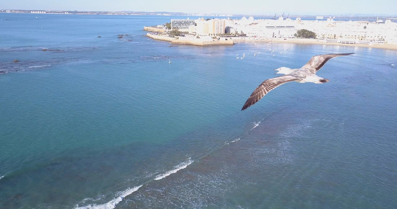 Animal Themes Animal Wildlife Animals In The Wild Beauty In Nature Bird Bird Photography City City Close-up Day Droneshot Gull Nature No People One Animal Outdoors Sea Sea Life Sky Swimming Water