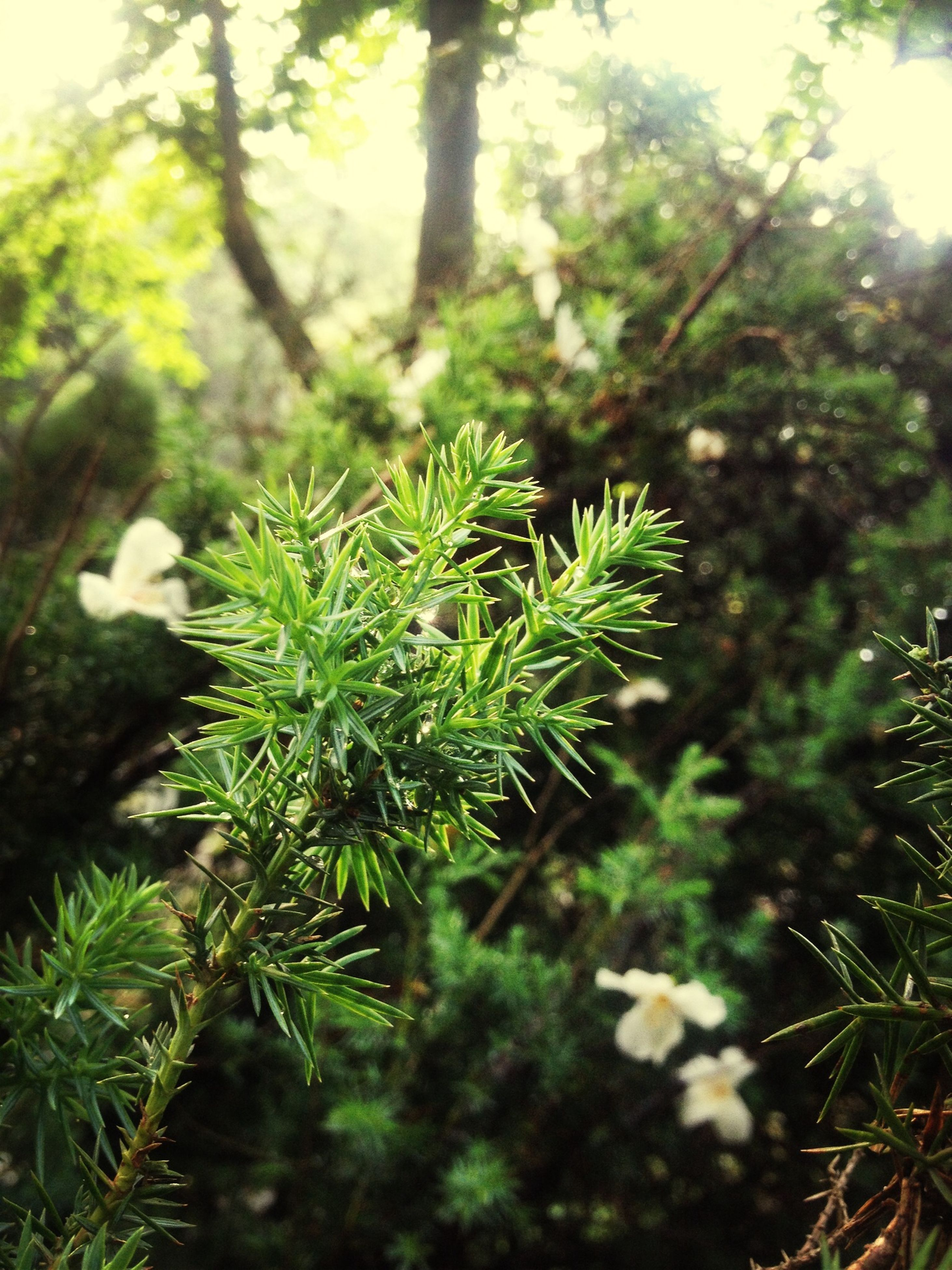 growth, tree, green color, nature, leaf, tranquility, plant, branch, focus on foreground, forest, close-up, beauty in nature, growing, sunlight, selective focus, green, day, outdoors, no people, lush foliage