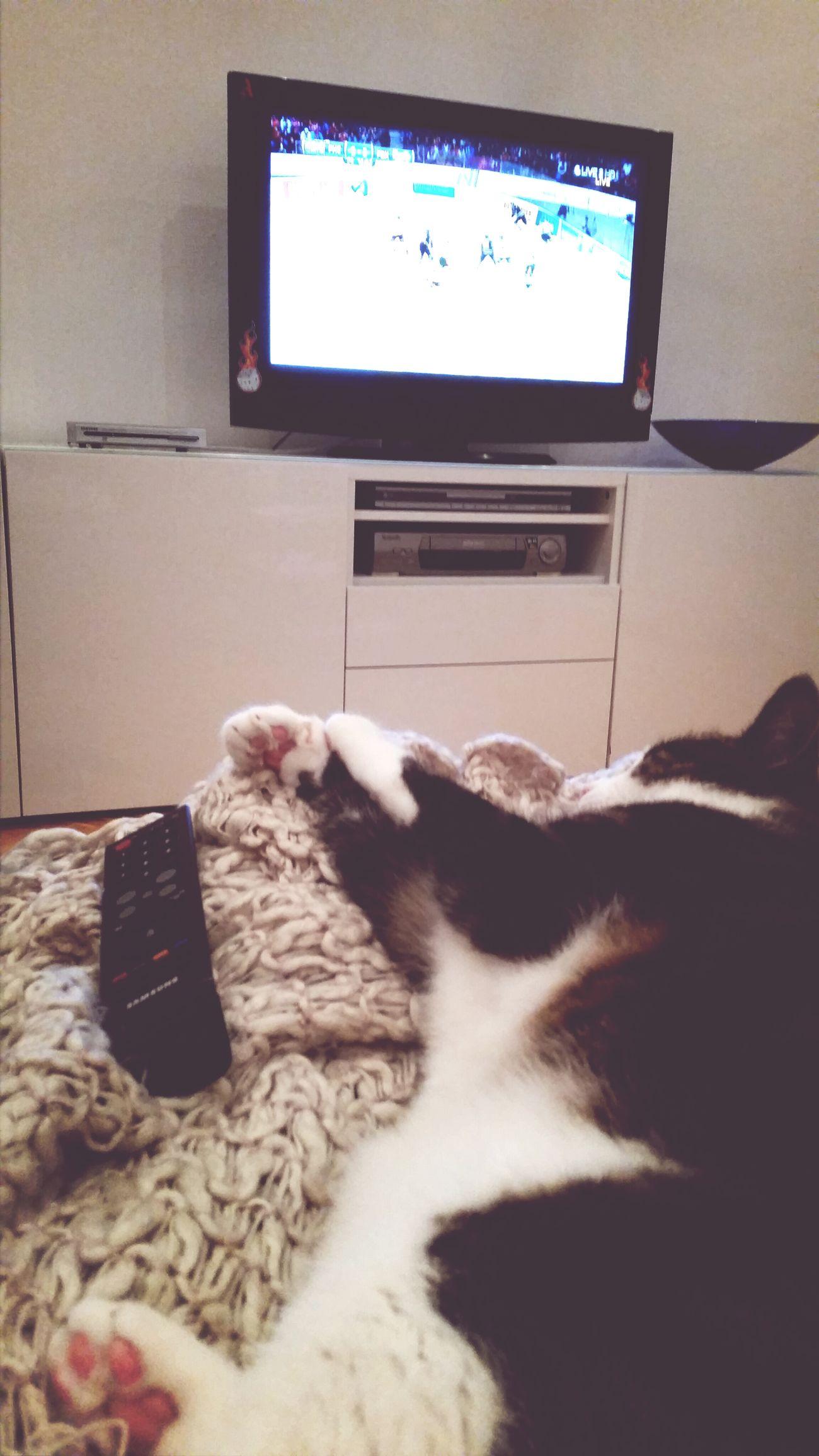 Sleepy cat Watching Hockey Sleepyhead Sleeping Cat